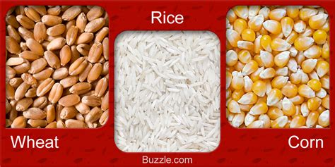 Different Kinds Of Seeds Pictures