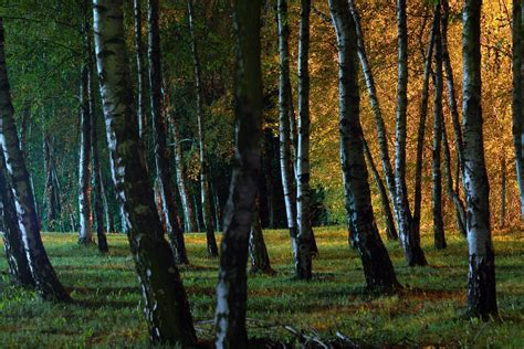 forest park lights free photo forest park light grass free image
