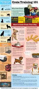 Crate Training crate training info graphic all ireland chinese crested