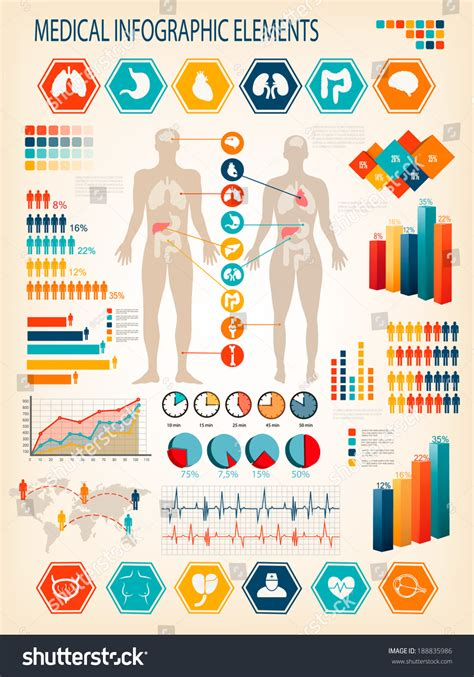 infographics human body medical infographics elements human body internal stock vector 188835986 shutterstock