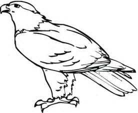 hawk coloring pages hawk 24 coloring page supercoloring