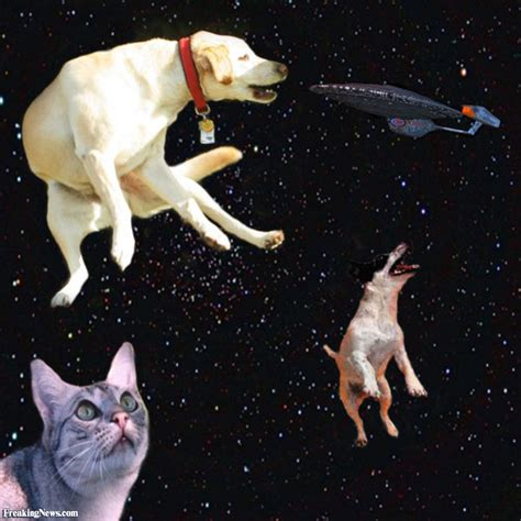 cat and puppy dogs and cats floating in space pictures freaking news