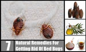 7 remedies for getting rid of bed bugs how to