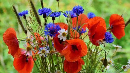 regalare fiori significato il significato dei fiori