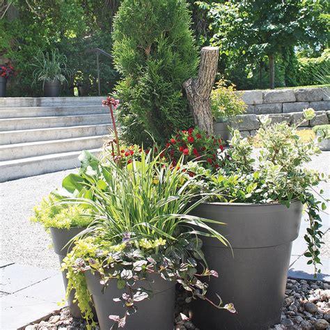 arbustes et vivaces en pot comment faire actualit 233 s jardinage et ext 233 rieur pratico pratique