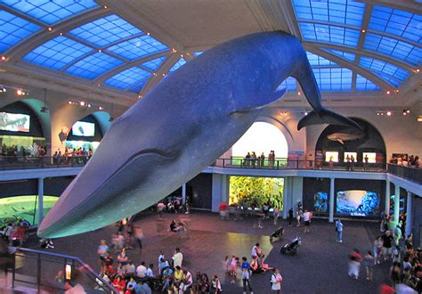 best museum in ny top museums in new york city new york museums museums