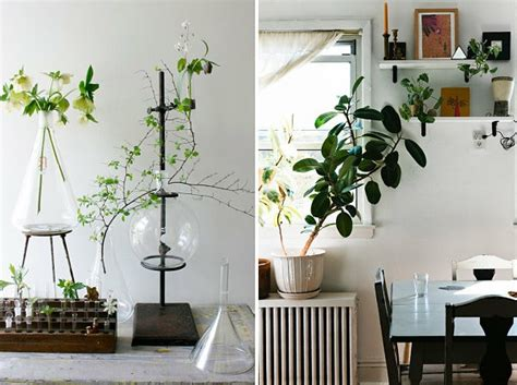 popular houseplants beautiful easy care plants fresh beautiful houseplants modern easy care plants fresh