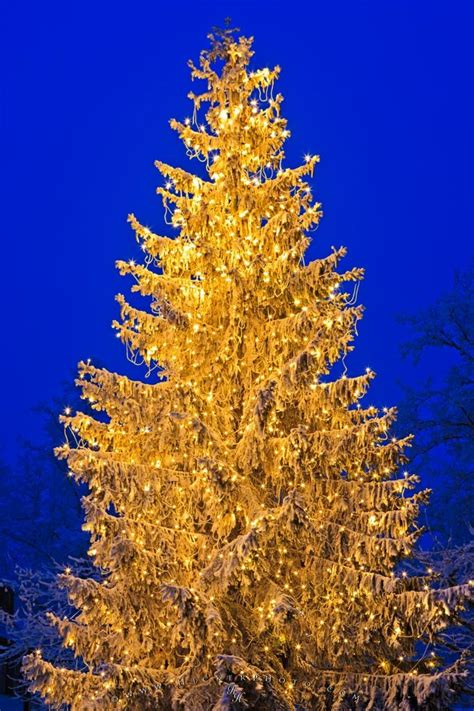 bright christmas tree picture photo information