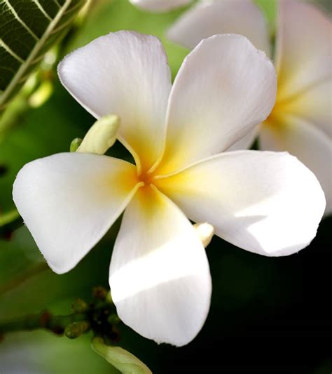 Flower White Top Flower White White Floral With Flower White Free