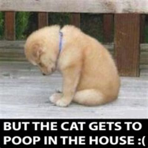 dog pooing in house it s not fair for the dog