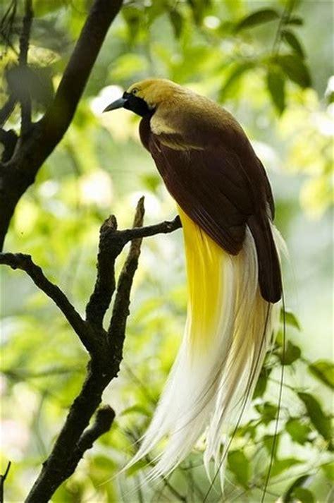 kumpulan gambar flora fauna indonesia gambar macam jenis