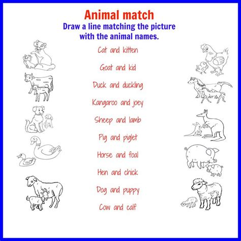 color names baby 25 great ideas about names of baby animals on