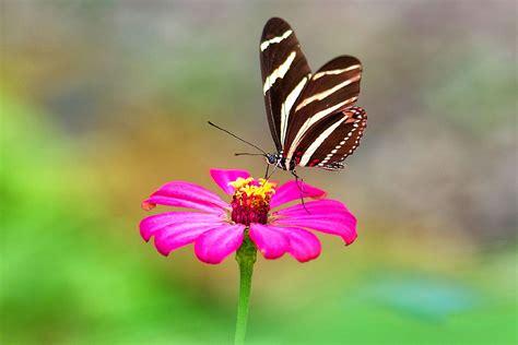 cerco immagini di fiori foto di fiori