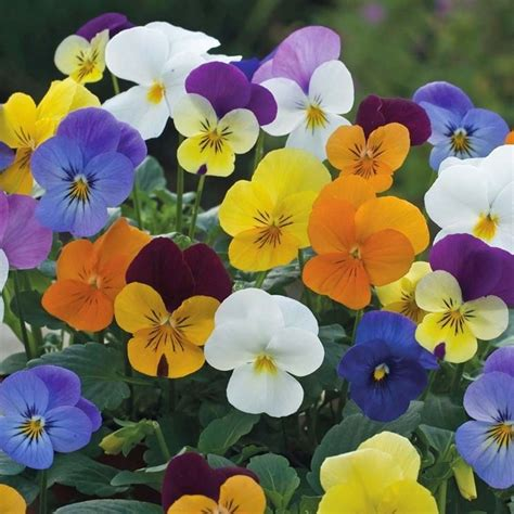 nomi fiori primaverili i fiori primaverili fiori per cerimonie fiori primaverili