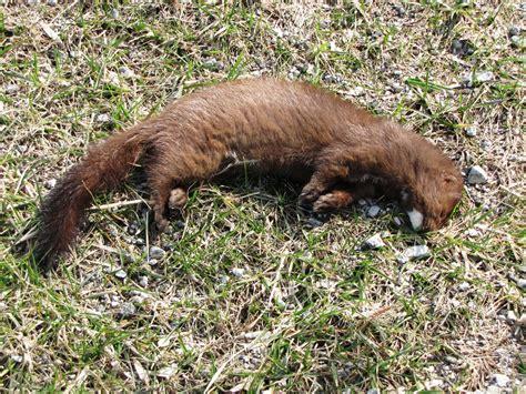 Mink Plumbing by Image Gallery Missouri Mink