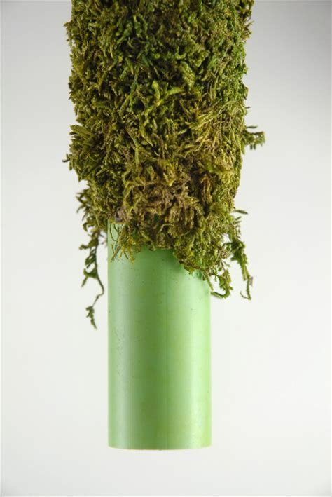 """Moss Covered Pole 18"""" x 2"""""""