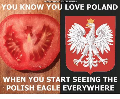 memes eagle  poland fbipolemical polish memes