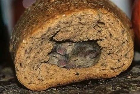 Rat Infestation Kitchen by Fda Seized Factories After Dead Mice Found In Bread
