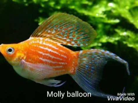 ghiaia per acquario acqua dolce top 10 pesci per l acquario di acqua dolce