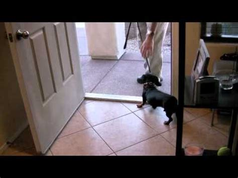 runs out front door a dachshund to stop running out the front door
