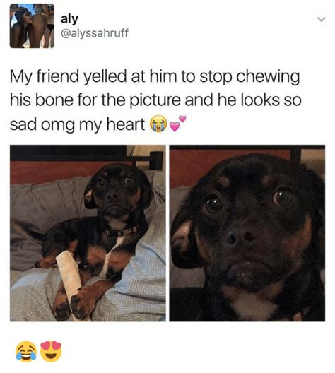 Get Him How To Overcome Heartaches by Aly My Friend Yelled At Him To Stop Chewing His Bone For