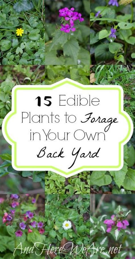 17 Best Images About Edible Plants In Texas On Pinterest