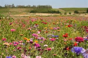 wildflower meadow garden www galleryhip com the hippest pics