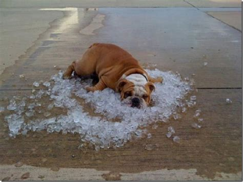 it s hot out funny images 10 signs it s too hot outside dose of funny