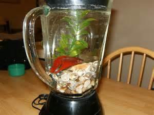 Glass Fishbowl Vase The Fishtank Blender Quot The Blender Tank Quot