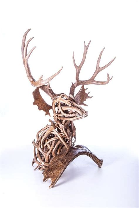 Buy Antler Sheds by 1000 Images About Antler Mounts On White