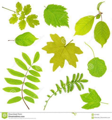 imagenes de hojas otoñales bladeren stock afbeelding afbeelding bestaande uit boom