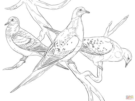 passenger pigeons coloring page free printable coloring