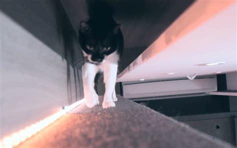 Arredare Un Mini Appartamento by Arredare Un Mini Appartamento A Misura Di Gatto Animali