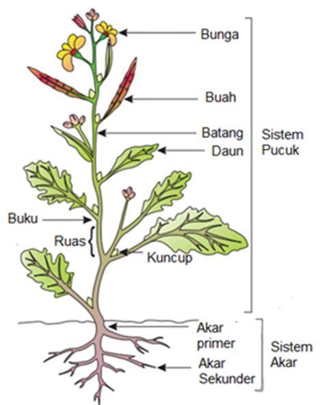 morfologi tumbuhan berbunga welcome d