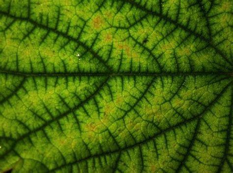 patterns in nature leaves leaf fractal branching patterns in nature fractal forms