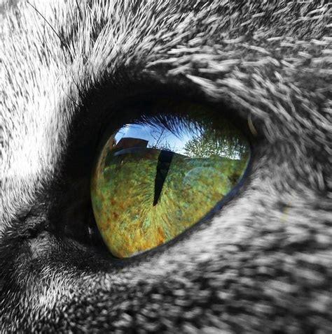 cat eye green cat eye by sinchensmiles on deviantart