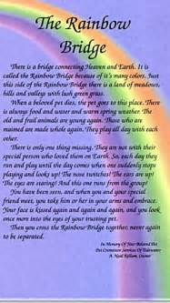 Just arrived at the meadow we will cross the rainbow bridge together