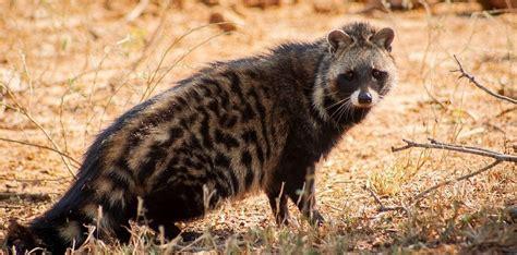 weird animals   bizarre animals  africa