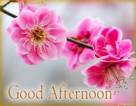 good afternoon free images gifs amp greetings