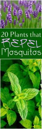 great plants and flowers that repel mosquitoes in your