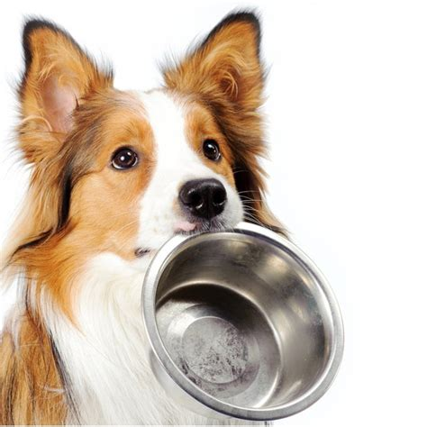 feeding puppies diet for dogs dogtime