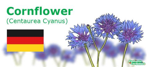 National Flowers Of Countries With Pictures