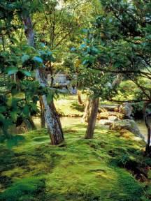 growing low maintenance moss hgtv