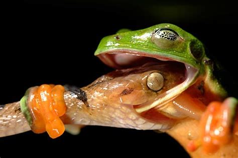 national geographic best wild animal photos of 2008