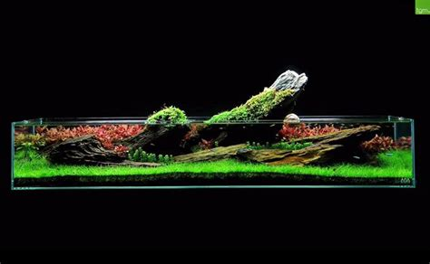 the green machine aquascape 40 best project fish tank images on pinterest fish