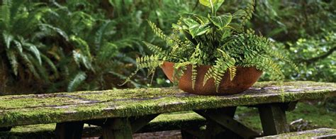 rusted iron fire pit bowl pond planter stand