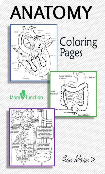 top 10 anatomy coloring pages for your toddler anatomy