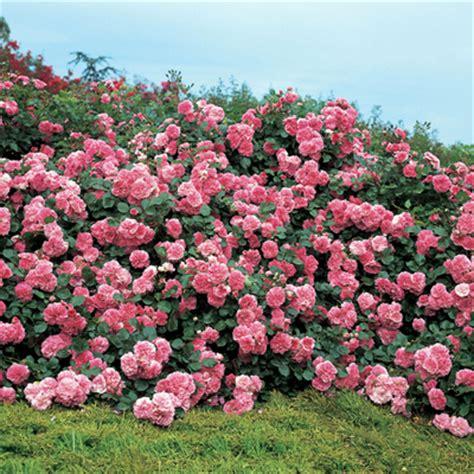 2070323080 les quatre saisons de ronsard giardini