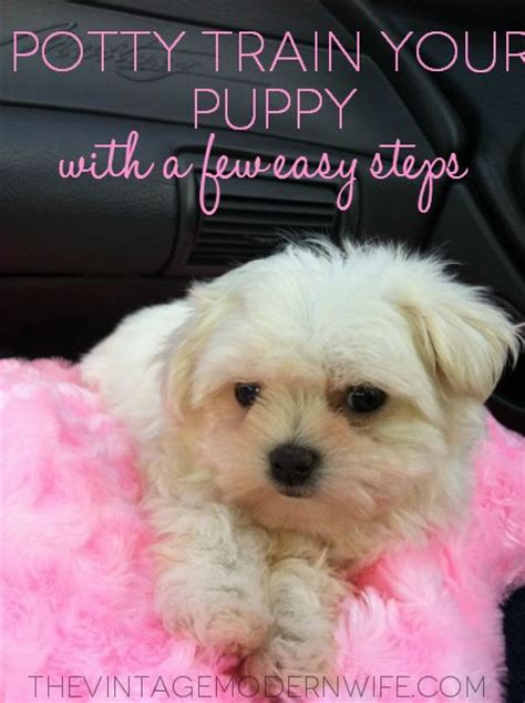 potty puppy in winter potty your puppy in a few easy steps chihuahuas the winter and vintage