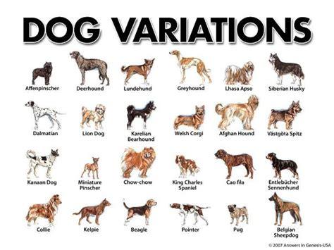 family dog breed types list  list